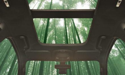 الخيزران: قوة فائقة وسرعة في النمو مع إمكانية استخدامه في سيارتك القادمة!